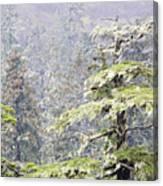 Foggy Tongass Rain Forest Canvas Print