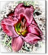 Foiled Beauty - Daylily Canvas Print