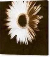 Folded Daisy Canvas Print