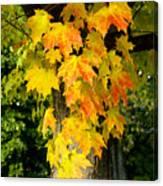 Foliage Fall Canvas Print