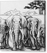 Following The Matriarch Canvas Print