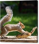 Food Fight Squirrel And Chipmunk Canvas Print