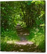 Footpath Lined With Hazel. Canvas Print