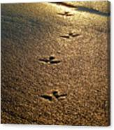 Footprints - Bird Canvas Print