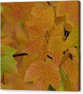 For Every Season There Is A Color Canvas Print