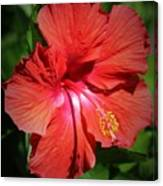 For The Love Of Hibiscus Canvas Print