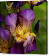 For The Love Of Iris Canvas Print