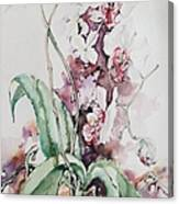 For The Love Of Orchids Canvas Print