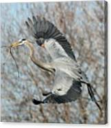 For The Nest Too Canvas Print