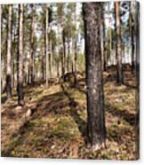 Forest Next Summer After A Fire Canvas Print