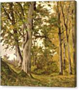Forest At Fontainebleau Canvas Print
