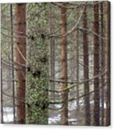 Forest At Winter Canvas Print