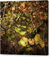 Forest Butterfly Canvas Print