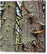 Forest Corrosion Bark Canvas Print