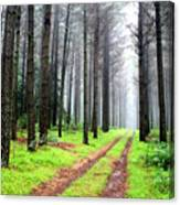 Forest Drive Canvas Print