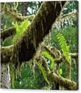 Forest Ferns Art Prints Fern Giclee Prints Baslee Troutman Canvas Print
