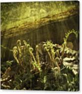 Forest Ferns Unfurling Canvas Print