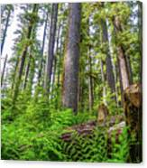 Forest Floor Of Hoh Rain Forest Canvas Print