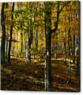 Forest Floor Two Canvas Print