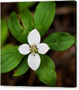 Forest Flower Canvas Print