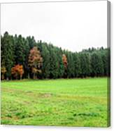 Forest In Bavaria Canvas Print