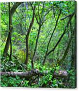 Forest In Hdr Canvas Print