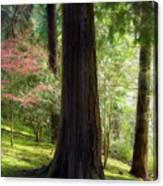 Forest In Portland Japanese Garden Canvas Print