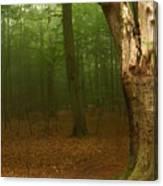 Forest Light 1 Canvas Print