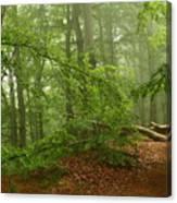 Forest Light 3 Canvas Print