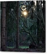 Forest Magic 7 Canvas Print