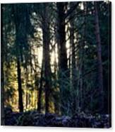 Forest Magic 8 Canvas Print