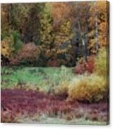 Forest Magic Canvas Print