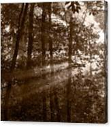 Forest Mist B And W Canvas Print