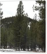 Forest Mountain Redux Canvas Print