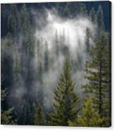 Forest Mystery Canvas Print