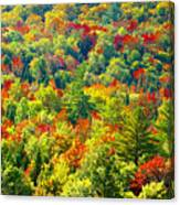 Forest Of Color Canvas Print