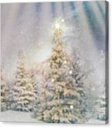 Forest Of Trees In The Light Canvas Print