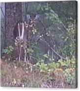 Forest Peek A Boo Canvas Print