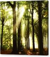 Forest Rays Canvas Print