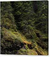 Forest River Canvas Print