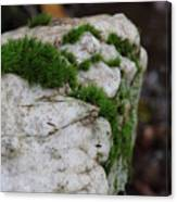 Forest Rock With Moss Canvas Print