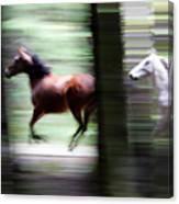 Forest Run Canvas Print