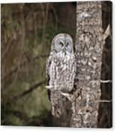 Forest Sentry Canvas Print