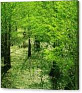 Forest So Green Canvas Print