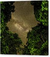 Forest Star Patch Canvas Print