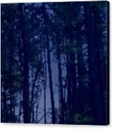 Forest Starlight Canvas Print