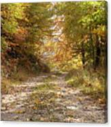 Forest Stone Path Canvas Print