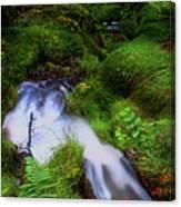 Forest Stream. Benmore Botanic Garden Canvas Print