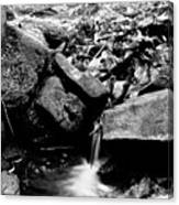Forest Stream In Black And White Canvas Print