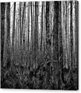 Forest Thru The Trees Canvas Print